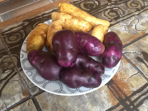 purple and fingerling